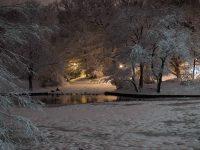 Pond Fowl