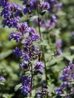 Vertical Pollenation