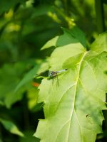 Leaf Landing