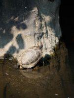 Turtle Ponders