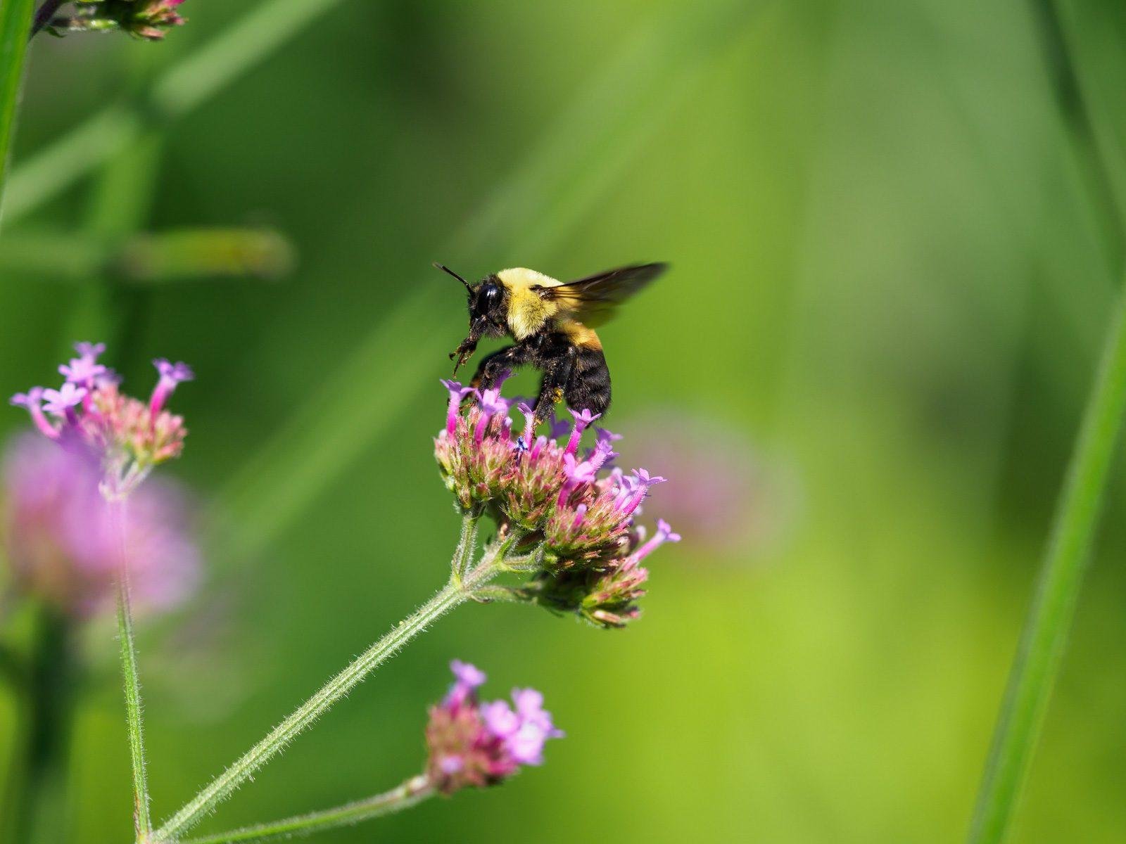 Bee C