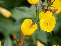 Requisite Bee Photo